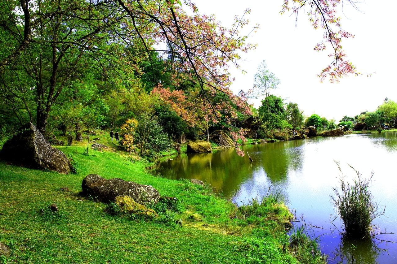 Natuurinclusief bouwen voor de perfecte tuin